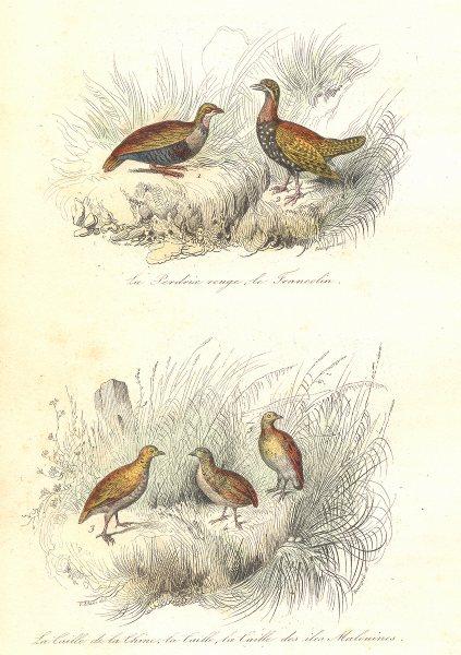 Associate Product BIRDS.Partridge,Francolin;Chinese,Malouine Quail;Perdrix,Caille.BUFFON 1841