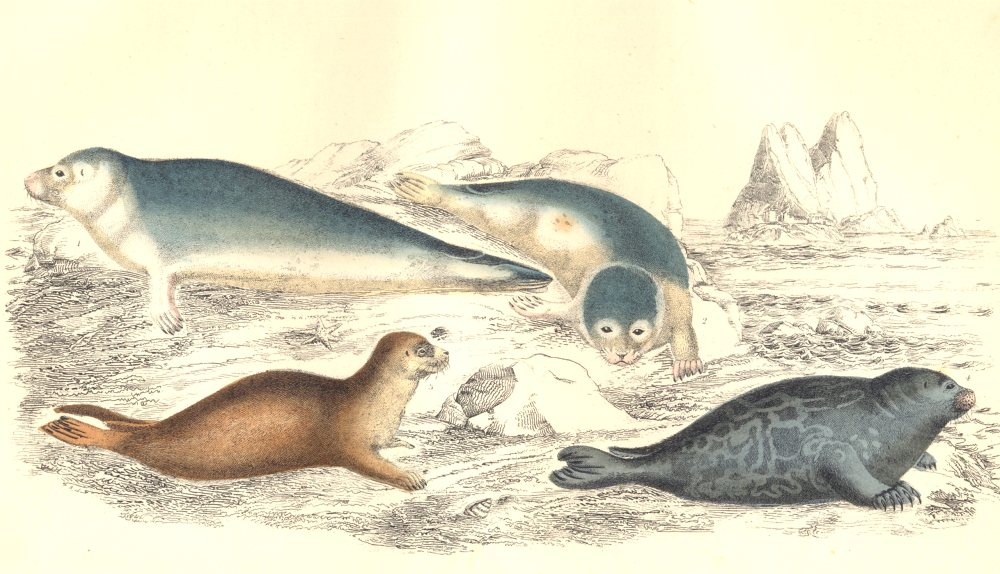 Associate Product SEALS. Common Seal; Fetid Seal. GOLDSMITH. Hand coloured 1870 print
