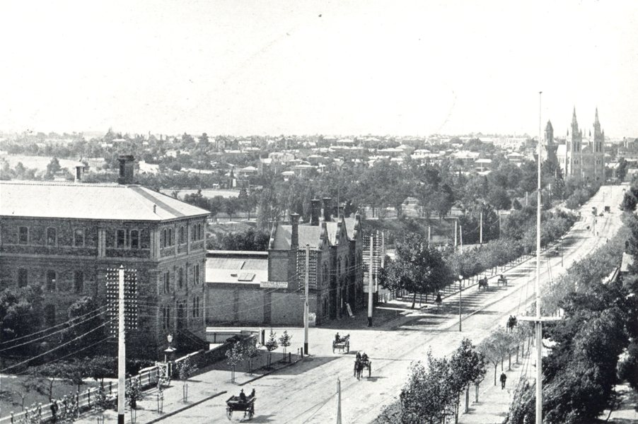 Associate Product ADELAIDE. North Adelaide, from North Terrace. Horses & carts 1900 old print