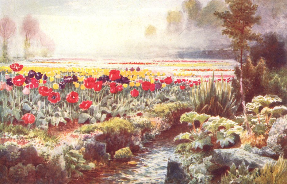 Associate Product CHANNEL ISLANDS. A Tulip Garden, Guernsey 1904 old antique print picture