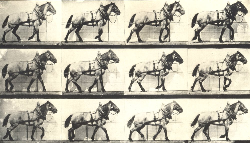Associate Product HORSES. Phases of the Cart Horse Walk 1912 old antique vintage print picture