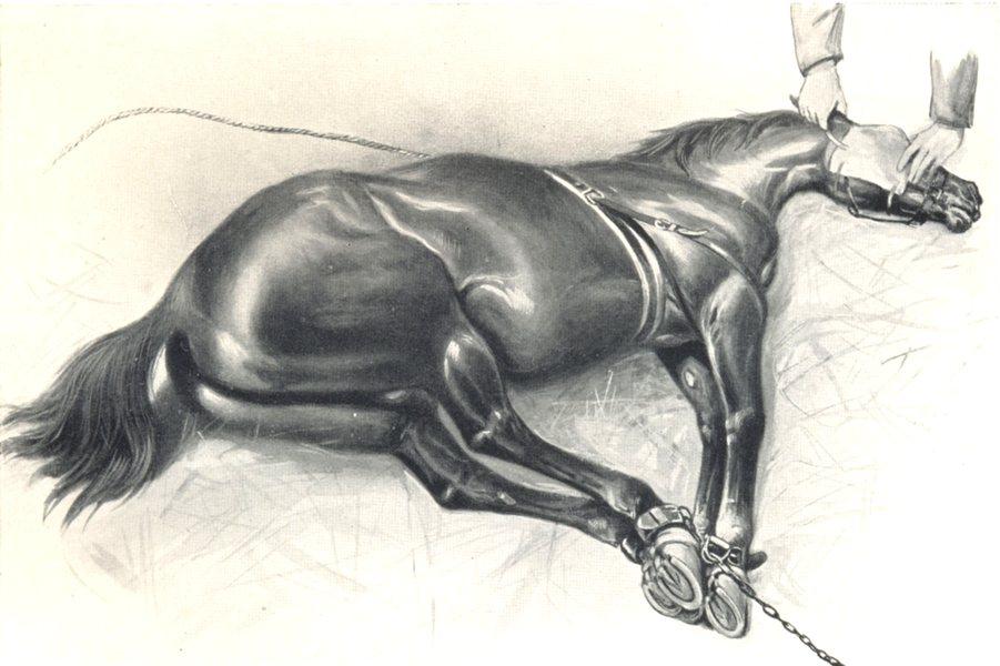 HORSES. Horse Cast 1912 old antique vintage print picture