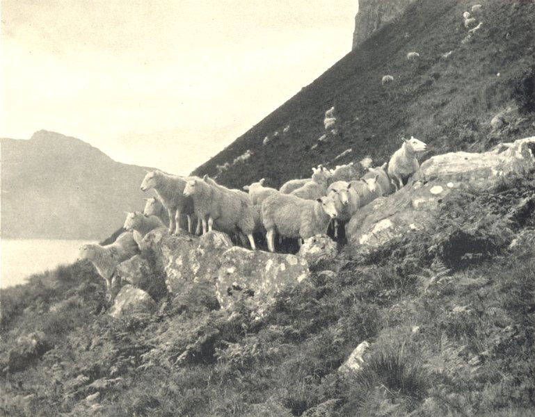 Associate Product SCOTLAND. Sheep-Farming in the Highlands; on the mountains 1912 old print