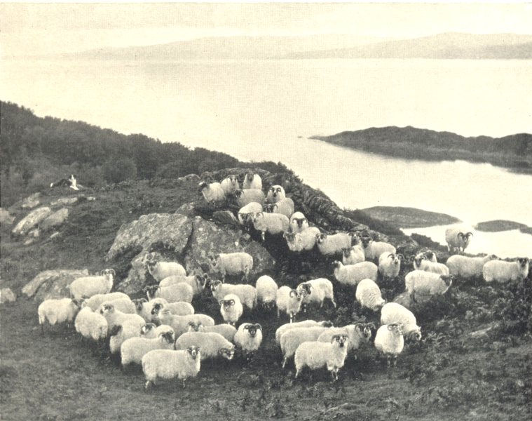 Associate Product SCOTLAND. Sheep-Farming in the Highlands; by the sea 1912 old antique print