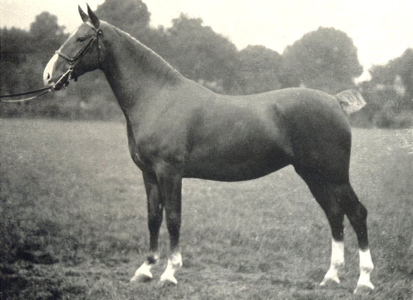 """Associate Product HORSES. Hackney Mare-""""Ophelia's Daughter Grace"""" Royal Lancs show, 1908 1912"""