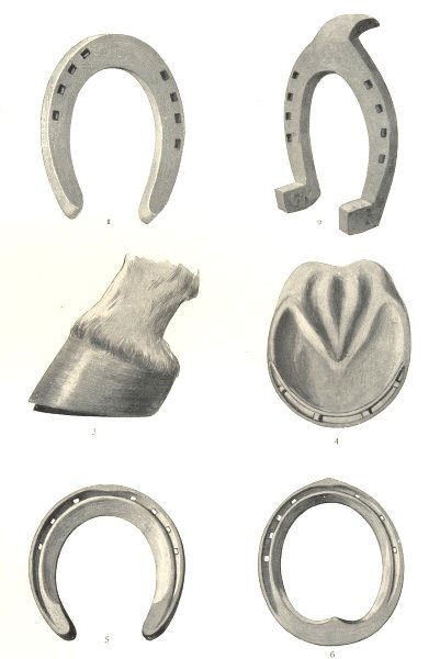 Associate Product HORSE SHOES. Fore-shoe Hind-shoe. Hoof Charlier tip. Carriage cart horses 1912