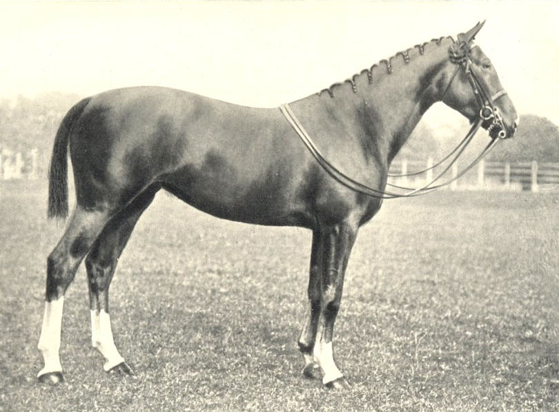 """Associate Product HUNTER FILLY. """"Princess Royal"""" RASE show prizewinner, 1907 1912 old print"""