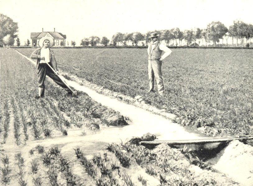Associate Product FARMING. Irrigation; Irrigating a Wheat Field by Furrow Flooding 1912 print