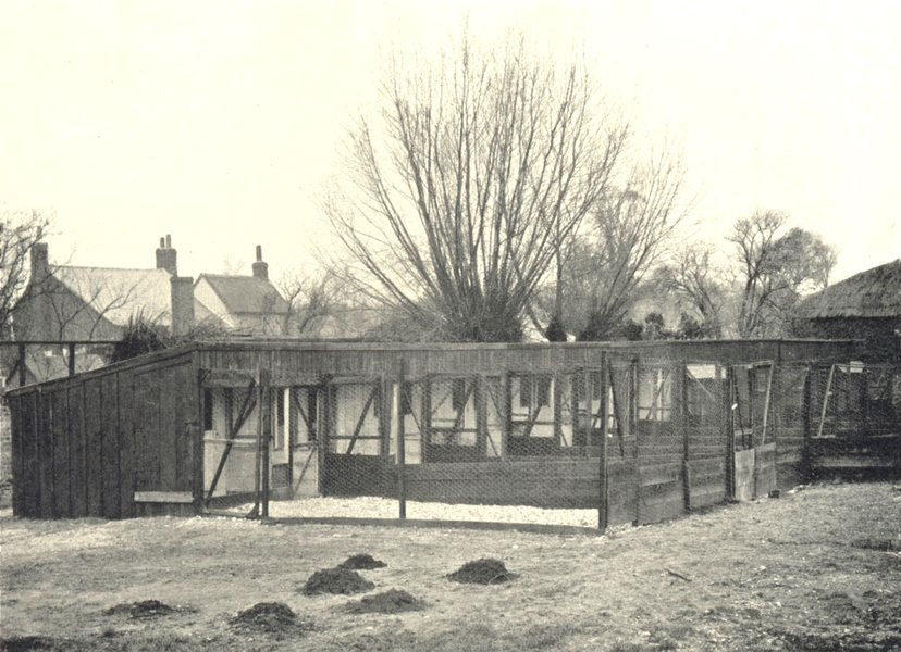 Associate Product POULTRY FARMING. Poultry Houses; Range of Open-Fronted Scratching Sheds 1912