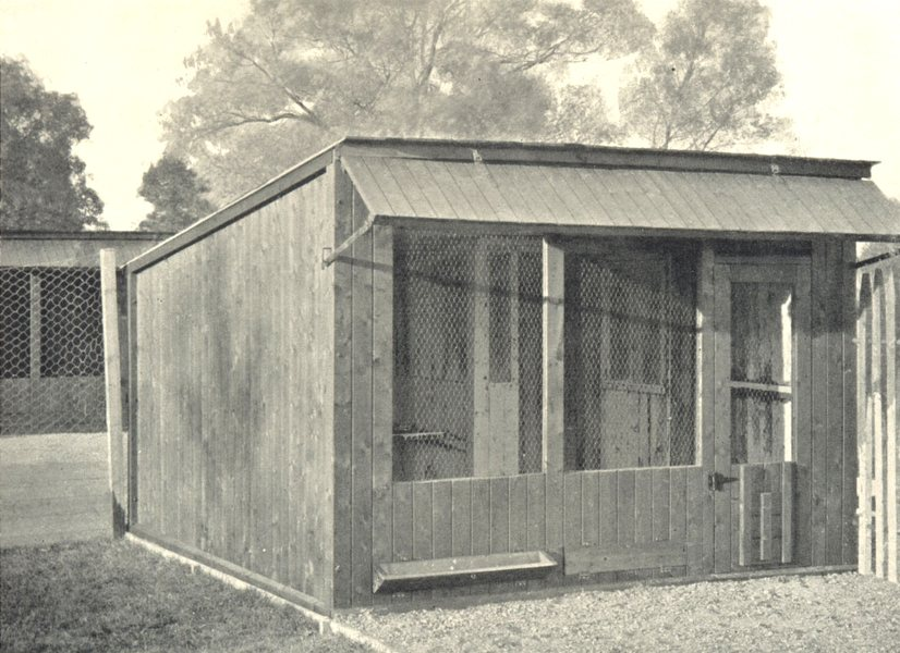 Associate Product POULTRY FARMING. Poultry Houses; Open-Fronted Scratching Shed 1912 old print