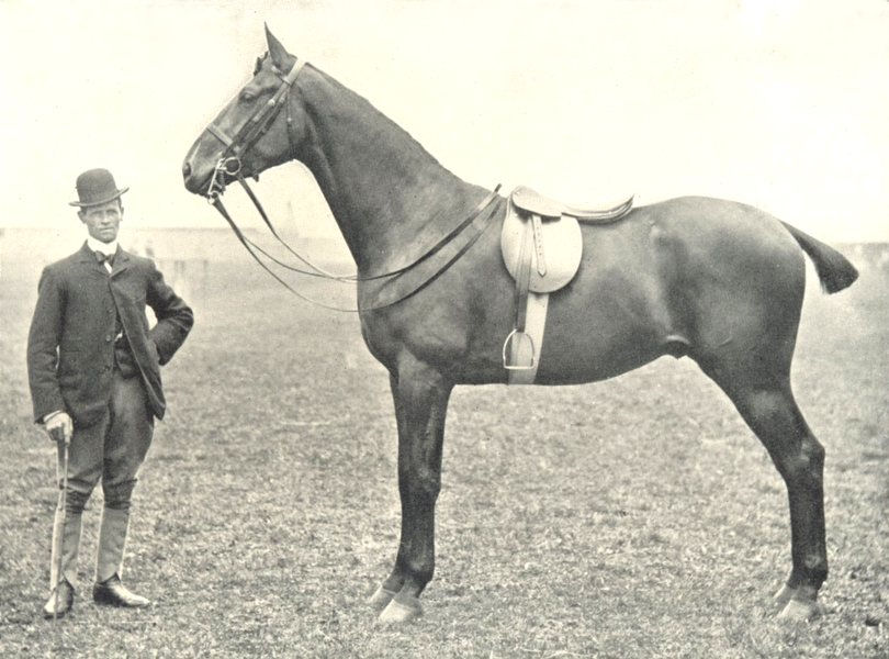 """Associate Product HORSES. Riding Horse-""""Volunteer"""" Champion at the RASE. show, 1900 1912 print"""
