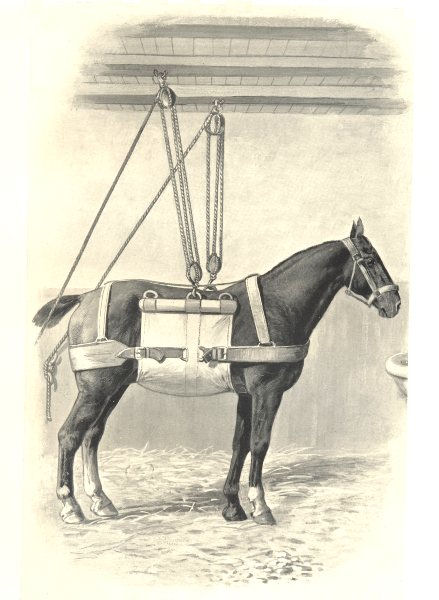 Associate Product HORSES. Simple Slings 1912 old antique vintage print picture