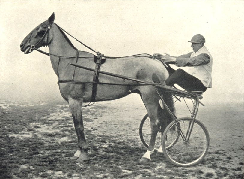 """Associate Product HORSES. Trotting Horse-""""Champion Dandy Boy"""" 1912 old antique print picture"""