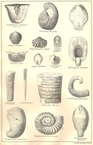 Associate Product BRITISH FOSSILS. Silurian. Molluscs. STANFORD 1880 old antique print picture