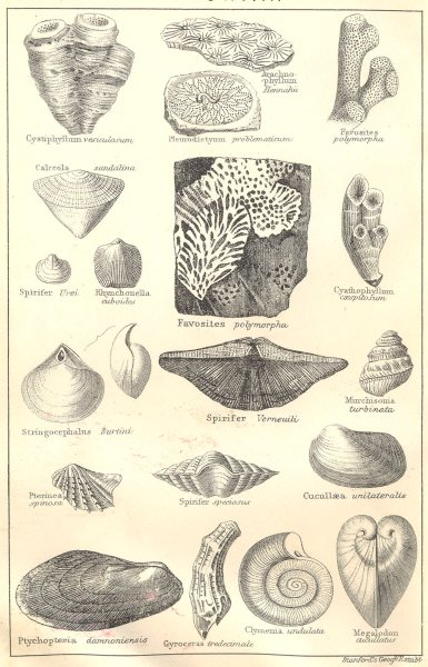 Associate Product BRITISH FOSSILS. Devonian. Molluscs. STANFORD 1880 old antique print picture
