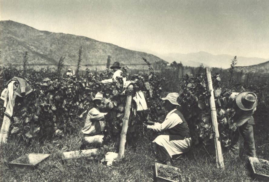Associate Product CHILE. Viña Tarapaca. Vendimia. Vina Tarapaca. Picking grapes 1932 old print