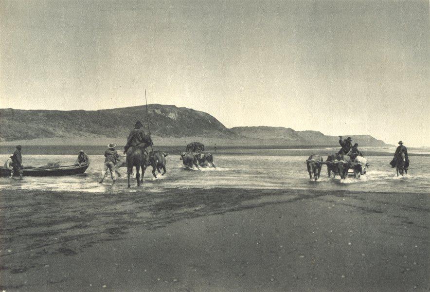 Associate Product CHILE. Boca Budi. Carretas en el Camino a Toltén. Tolten. Carts 1932 old print