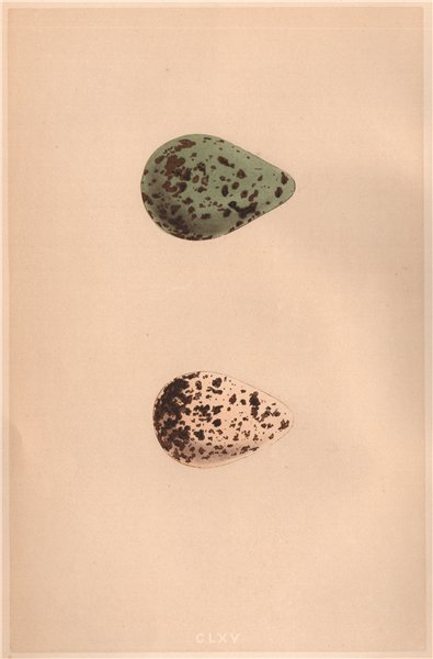 Associate Product BIRD EGGS. Spotted Redshank; Redshank. MORRIS 1867 old antique print picture
