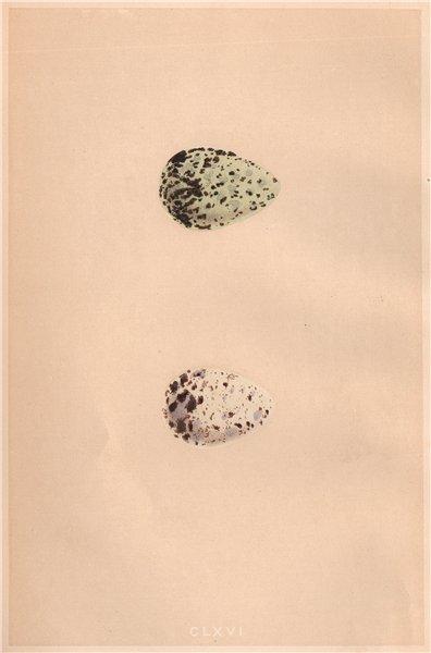 Associate Product BIRD EGGS. Green Sandpiper; Wood Sandpiper. MORRIS 1867 old antique print