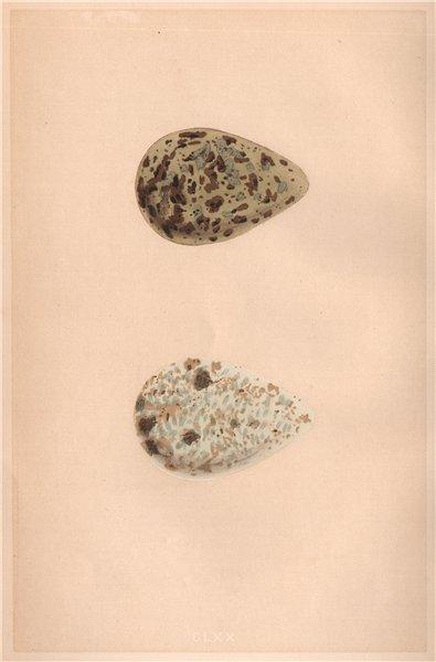 Associate Product BIRD EGGS. Black-tailed Godwit; Bar-tailed Godwit. MORRIS 1867 old print