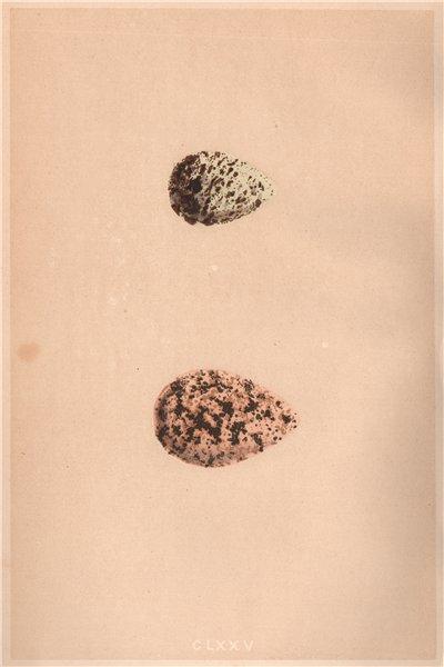 BIRD EGGS. Curlew Sandpiper; Knot. MORRIS 1867 old antique print picture
