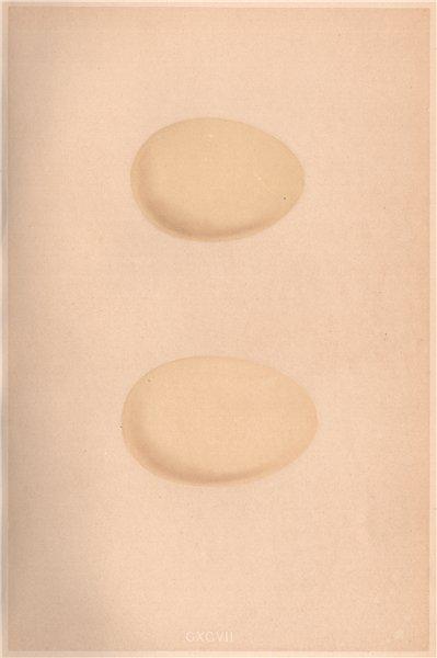 Associate Product BIRD EGGS. Scaup; Tufted Duck. MORRIS 1867 old antique vintage print picture
