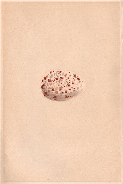 BIRD EGGS. Noddy. MORRIS 1867 old antique vintage print picture