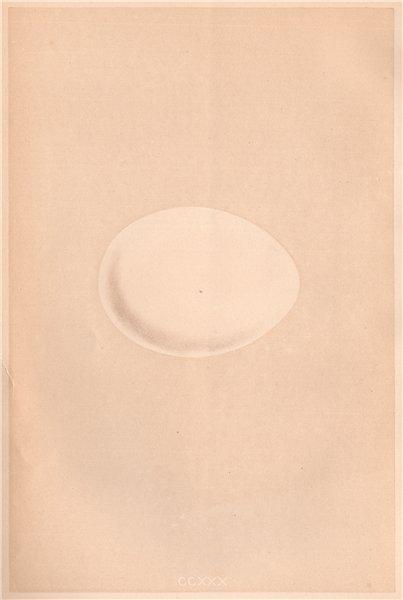 Associate Product BIRD EGGS. Fulmar. MORRIS 1867 old antique vintage print picture