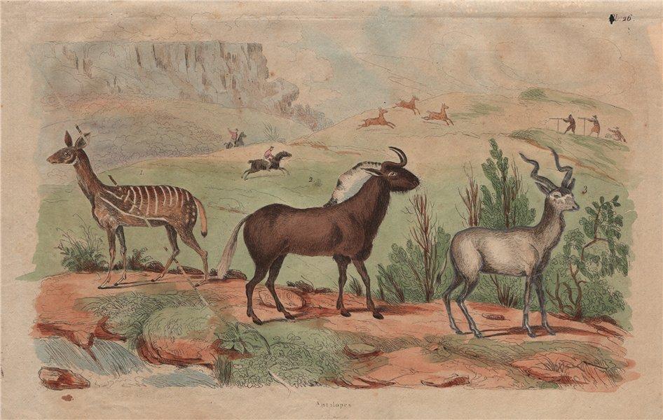 Associate Product MAMMALS. Antilopes (Antelopes) 1833 old antique vintage print picture