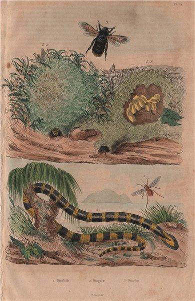 Associate Product Bombyliidae (Bee flies/fly) Bongare (krait). Bourdon (Bumblebee) 1833 print