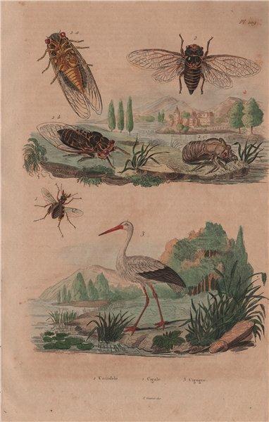 Associate Product Cicindele (Tiger Beetle). Cigale (cicada). Cigogne (Stork) 1833 old print