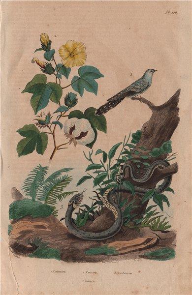 Associate Product PLANTS. Cotonier (Cotton Plant). Coucou (Cuckoo). Couleuvre (Grass Snake) 1833