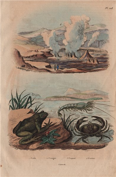 Associate Product Crabe (Crab). Crangon (caridean shrimp). Crapaud (Toad). Geysers 1833 print