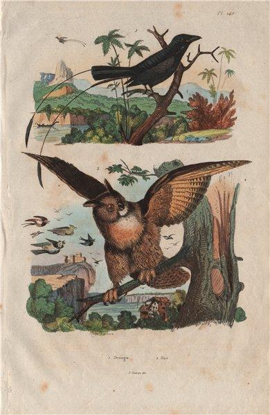 Associate Product BIRDS. Greater Racket-tailed Drongo. Duc (Eurasian Eagle-Owl) 1833 old print