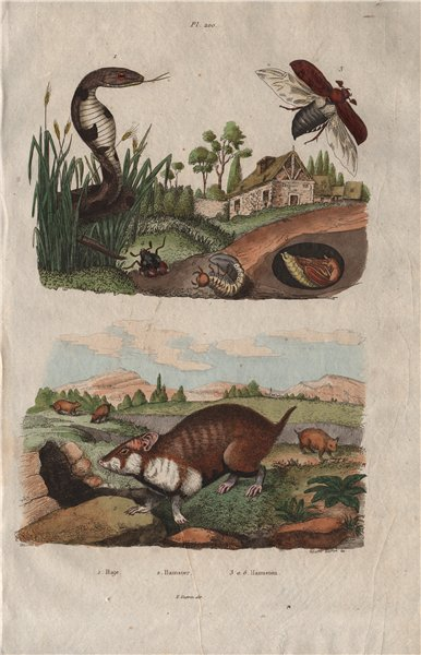 Associate Product Haje (Egyptian Cobra). Hamster). Hanneton (Cockchafer/Scarab Beetle) 1833