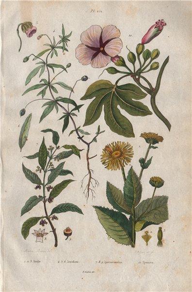Associate Product PLANTS. Inule (Inula). Ionidion. Carapichea ipecacuanha. Ipomoea 1833 print