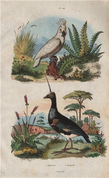 Associate Product Kakatoes (White crested Cockatoo). Kamichi (Southern Screamer); head spike 1833