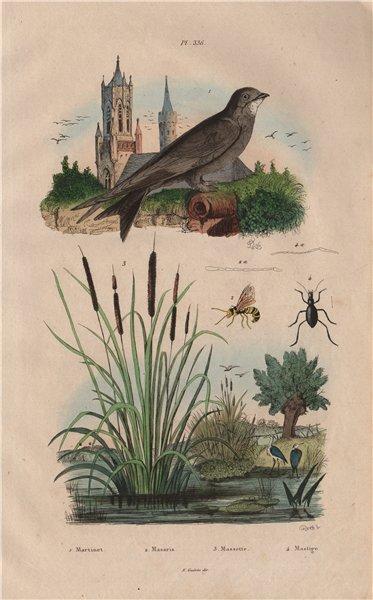 Associate Product Martinet (Swift). Masaris vespiformis wasp. Massette (bulrush). Mastige 1833