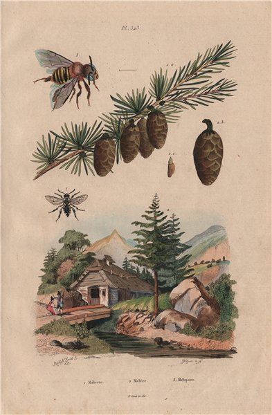Associate Product Melecta (Cuckoo bee). Méléze (Larch). Mélipona (Stingless Bee) 1833 old print