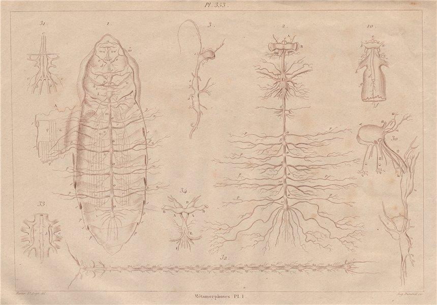 Associate Product LEPIDOPTERA. Métamorphoses. Metamorphosis. Pl. I 1833 old antique print