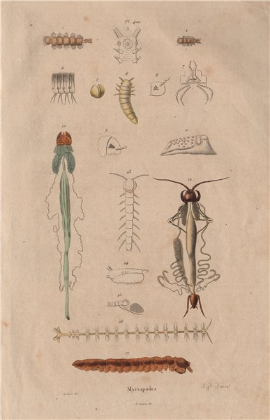Associate Product MYRIAPODS ANATOMY. Myriapoda. Arthropods 1833 old antique print picture