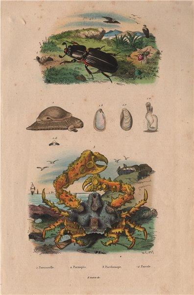 Associate Product CRUSTACEANS. Parmacelle. Parnopès. Parthenope crab. Passale 1833 old print