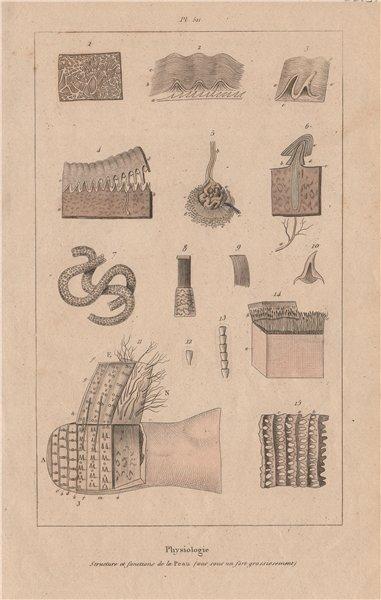 Associate Product SKIN. Physiology. Structure et fonctions de la Peau 1833 old antique print