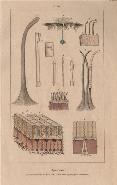 Associate Product SKIN. Physiology. Structure et fonctions de la Peau. Pores. Hair 1833 print