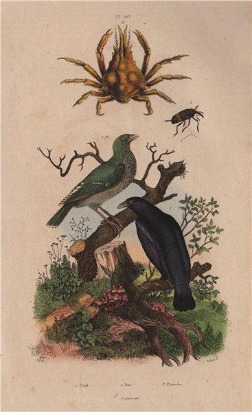 Associate Product Pirol (Oriole). Pise (Pisa Crab). Pissode (Weevil) 1833 old antique print