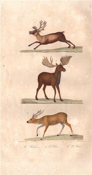 Associate Product UNGULATES. Renne (Reindeer); Elan (Eland);  Axis (Chital). BUFFON 1837 print