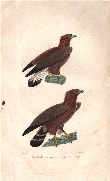 Associate Product EAGLES Aigle Commun (Common Eagle); Grand Aigle (Eagle). Birds. BUFFON 1837