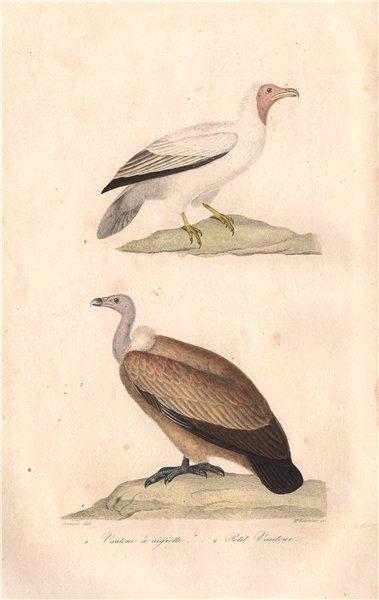 Associate Product VULTURES. Vautour à Aigrette (Crested Vulture); Petit Vautour. BUFFON 1837