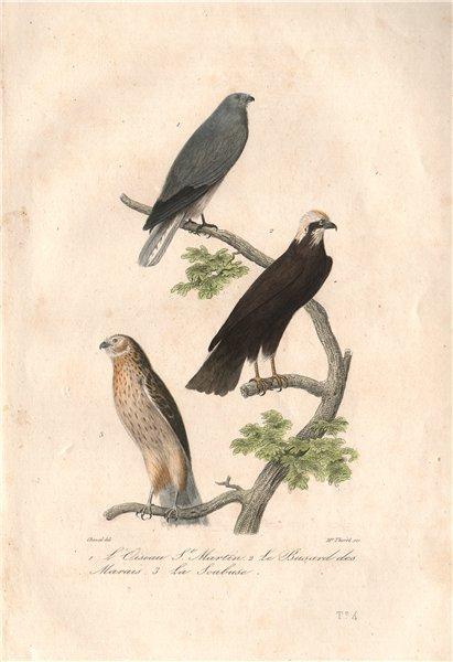 Associate Product HARRIERS. Busard St Martin & Marais; Soubuse (Marsh & Hen Harriers) BUFFON 1837