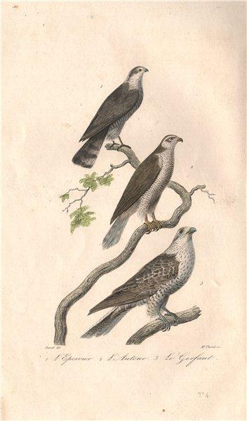 Associate Product RAPTORS. Sparrowhawk; Chanting Goshawk; Gyrfalcon. Autour. Gerfaut. BUFFON 1837